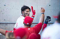 Orem Owlz third baseman Kevin Maitan (9) is congratulated by teammates as he returns to the dugout after hitting a home run during a Pioneer League game against the Ogden Raptors at Home of the OWLZ on August 24, 2018 in Orem, Utah. The Ogden Raptors defeated the Orem Owlz by a score of 13-5. (Zachary Lucy/Four Seam Images)