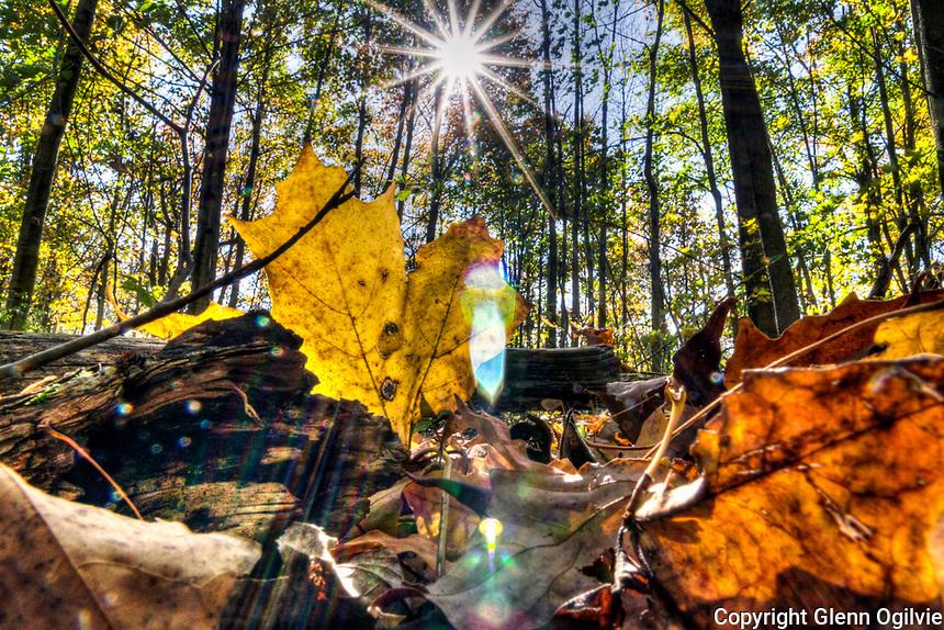 HDR Perch Creek in the fall