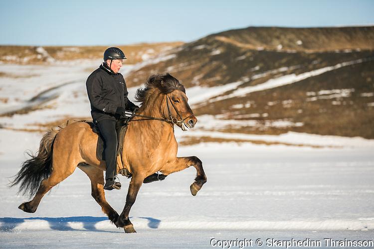 Oddi frá Hafsteinsstöðum & Skapti Steinbjörnsson