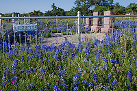 Blue Bonnets overun the Art East Cemetery located on the sest bound side of Highway 29, about 11 miles east of Mason Texas.