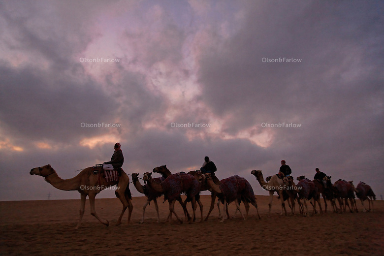 From across the vast and parched Arabian Peninsula, camels converge on Abu Dhabi for an annual beauty contest.