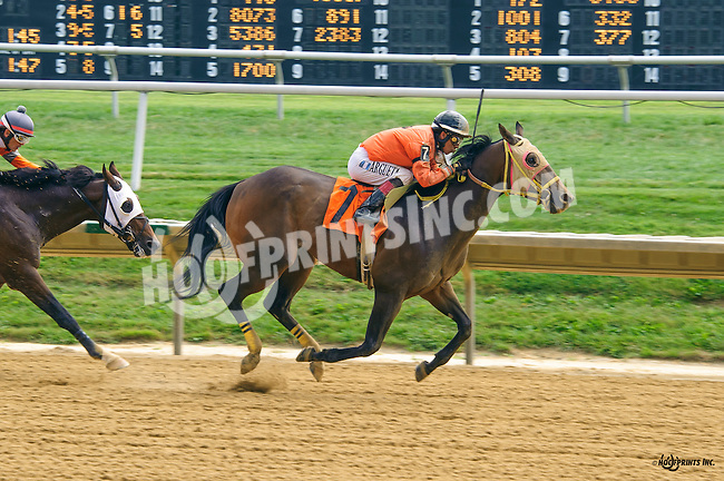 Cherokee Road winning at Delaware Park on 9/2/16