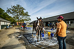 JUNE 06: Bricks and Mortar at Belmont Park in Elmont, New York on June 06, 2019. Evers/Eclipse Sportswire/CSM