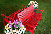 Pots of tulip flowers and bench. Wooden Shoe Tulip Farm. Oregon
