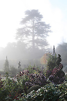 An ancient cedar tree emerges through the foggy gardens