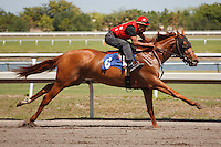 #8Fasig-Tipton Florida Sale,Under Tack Show. Palm Meadows Florida 03-23-2012 Arron Haggart/Eclipse Sportswire.