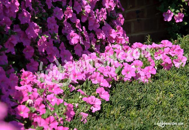 Flowers at Delaware Park on 9/27/14
