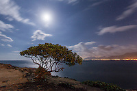 Tree at water's edge under a full moon at night, Laie Point, Oahu