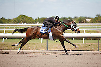 #156Fasig-Tipton Florida Sale,Under Tack Show. Palm Meadows Florida 03-23-2012 Arron Haggart/Eclipse Sportswire.