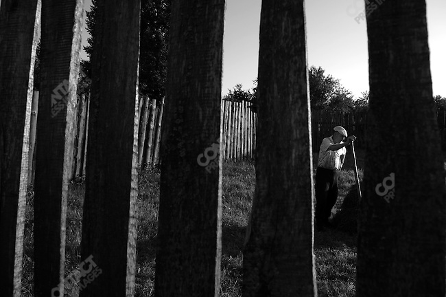 A veteran of WWII, Piotr Ivanovich Kondrashov, 83, raked hay in the late evening, that will be used to feed his animals in the winter. Russia, July 22, 2008.