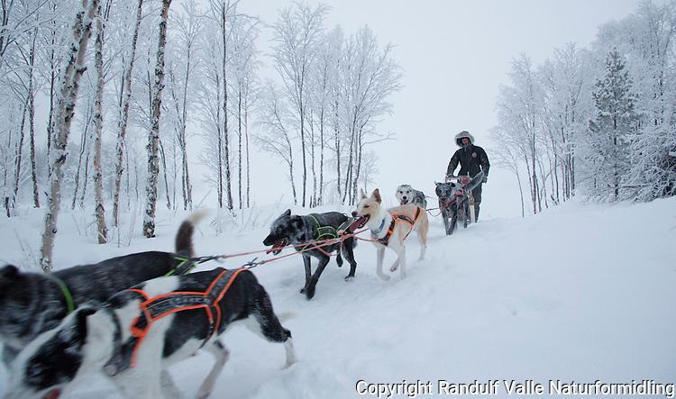 Hundekjøring ved Ellentjern i Pasvik når desemberdagen er på det lyseste. ---- Dog sled in Pasvik.