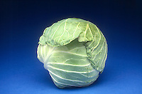BRASSICA VEGETABLE<br />