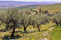 Tunisia, Dougga.  Olive Trees, Countryside.