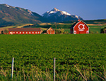Wallowa County, OR   <br /> The OK Quarter Circle barn (built in 1933) in the Wallowa Valley with Bonneville Mountain and Mount Howard in the distance