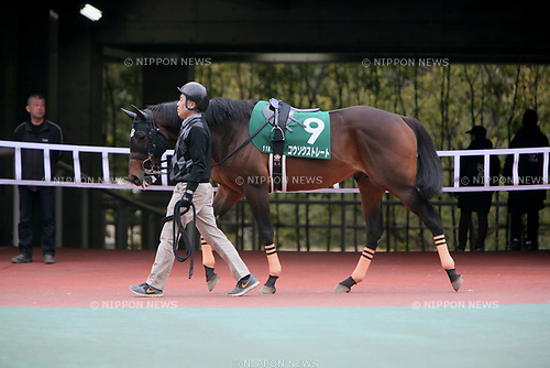 Kosoku Straight,<br /> MARCH 18, 2017 - Horse Racing :<br /> Kosoku Straight is led through the paddock before the Chunichi Sports Sho Falcon Stakes at Chukyo Racecourse in Aichi, Japan. (Photo by Eiichi Yamane/AFLO)