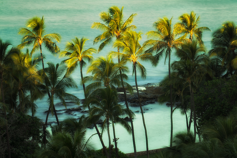 Palm trees and ocean at first light. Ko Olina, Oahu, Hawaii