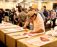 Inspecting tuna at Tsukiji Fish Market