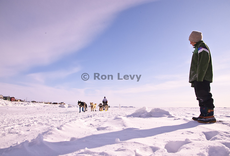 Spectator Tomas Levy-Canedo watches French musher Nicolas Petit along Bering Sea near Nome, Alaska during Iditarod Dogsled Race, 2012