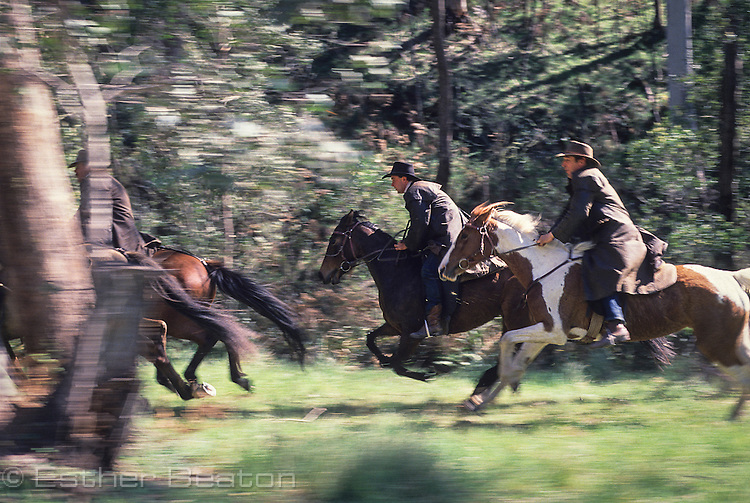 Mountain Cattlemen or stockman, racing through trees. Near Mt Buller, Snowy Mountains, Victoria.