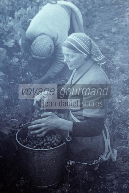 Europe/France/Centre/37/Indre-et-Loire/Civray-de-Touraine: Vendanges en 1938 - Récolte des raisins par les femmes - Scène de vendange manuelle