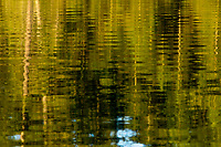 Abstract image of reflections in Cedar Lake in the West Canada Lakes Wilderness Area in the Adirondack Forest Preserve in New York State