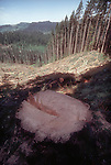 Logging, Freshly cut old growth Douglas Fir, clear cut, Southwest Washington State, Pacific Northwest forests, USA,