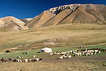 Yurt and goat herds, Ger camp, Gov Altai Province, Mongolia