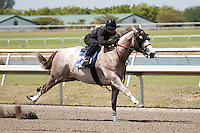 #113Fasig-Tipton Florida Sale,Under Tack Show. Palm Meadows Florida 03-23-2012 Arron Haggart/Eclipse Sportswire.