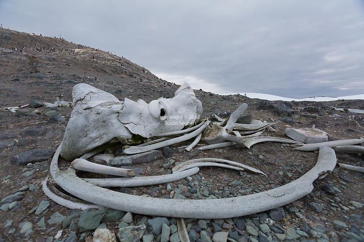 Danco Island, Errera Channel, Antarctica