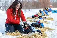 "Volunteer dog handler, AKA ""Droplet"" Samantha Freeborn works with one of the many dropped dogs at the dog lot at the Galena checkpoint during the 2017 Iditarod on Thursday afternoon March 9, 2017.<br /> <br /> Photo by Jeff Schultz/SchultzPhoto.com  (C) 2017  ALL RIGHTS RESERVED"