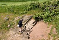 Geologische Verwerfung Gneis-Sandstein im Museum NaturBornholm auf der Insel Bornholm, D&auml;nemark, Europa<br /> Geological fault Gneiss-Sandstone at Museum NaturBornholm, Isle of Bornholm Denmark