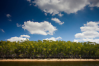 Mangroves, Ten Thousand Islands, Florida Everglades, USA
