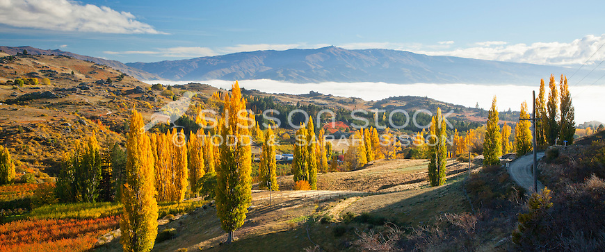 Autumn colour along Conroys road, near Alexandra in Central Otago, New Zealand - stock photo, canvas, fine art print