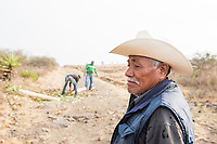 Lareano Vazquez, 82 years old supervises Edgar in the background, Lareano is a representative of the Ejido (communal land) from which Edgar has permission to harvest. Edgar Angeles harvesting a wild Karwinskii maguey also known as Largo, Serial or Tovasiche to be later cooked and distilled for mezcal. Mezcal Real Minero, Ocotlan de Morelos, Oaxaca, Oaxaca, Mexico