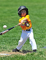 PNLL T-Ball Marauders Action 2015. (Photo by AGP Photography)