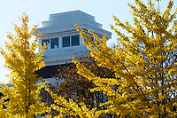 Fall view towards Colvard Student Union with gingko leaves.<br />  (photo by Megan Bean / &copy; Mississippi State University)