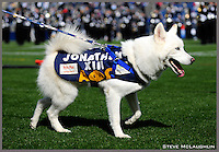 Jonathan the UCONN Husky Dog