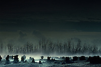 Desolate landscape