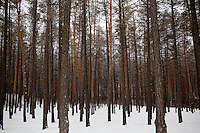 A view of trees in a forest park in Ufa, Bashkortostan, Russia.