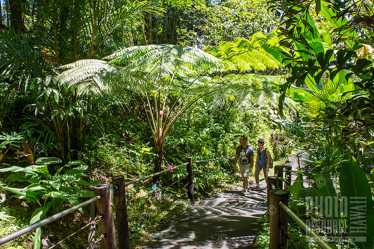 Visitors take in the lush surroundings around the boardwalk at Hawaii Tropical Botanical Garden in Papa'ikou near Hilo, Big Island of Hawai'i.