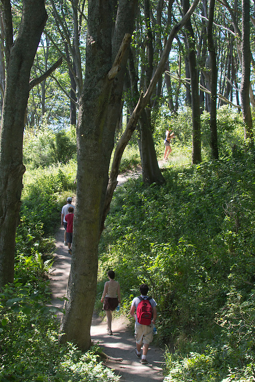 Seattle, walkers on forest trail, Discovery Park, Magnolia Bluff, Puget Sound, Washington State, Pacific Northwest, USA,