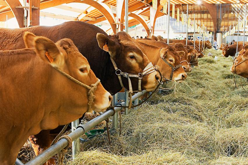 Le Festival de l'élevage et du veau de lait élevé sous la mère.<br /> Concours de race Limousine sous la Halle Georges Brassens.