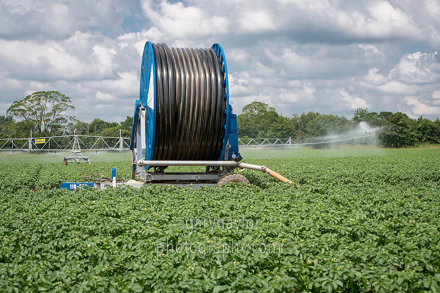 Irigating main crop potatoes with Briggs reel & boom - Lincolnshire, June