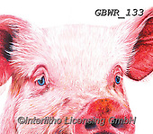 Simon, REALISTIC ANIMALS, REALISTISCHE TIERE, ANIMALES REALISTICOS, paintings+++++Card_OliviaH_Pig,GBWR133,#a#, EVERYDAY,pig