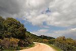 Carmel Scenic Road