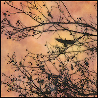 Mixed media encaustic painting with photography of birds in branches with berries and sunset sky.