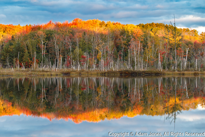 Sunrise on fall colors and birch trees reflected on Red Jack Lake, Hiawatha National Forest, Upper Peninsula of Michigan.