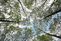 FOREST_LOCATION_90129