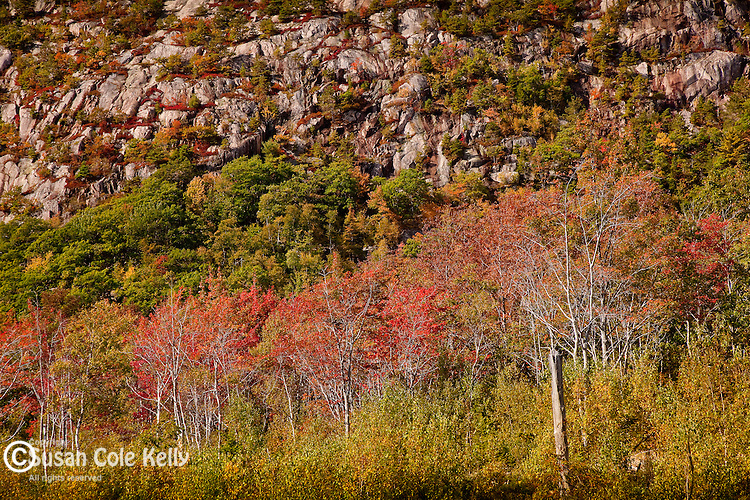 Fall foliage on the Great Meadow, Acadia National Park, ME, USA