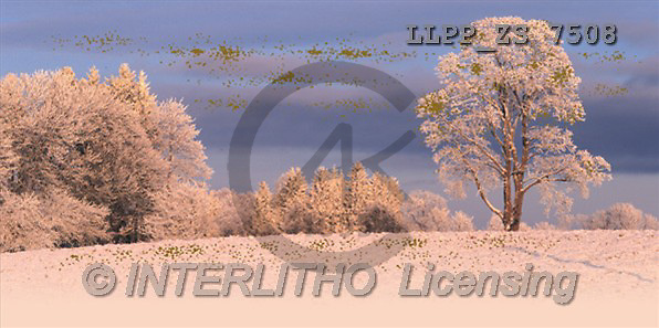 Maira, CHRISTMAS LANDSCAPE, photos(LLPPZS7508,#XL#) Landschaften, Weihnachten, paisajes, Navidad